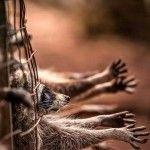 ¡Ayuda, los animales esperan tu ayuda!