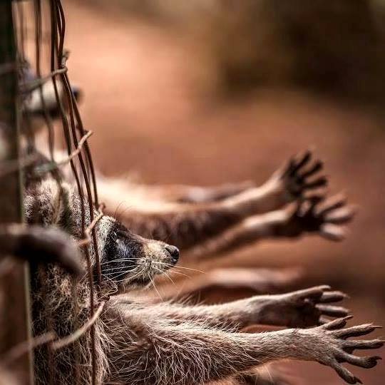 Animales piden ayuda
