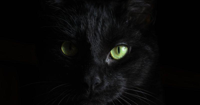 Mi gato no es mío