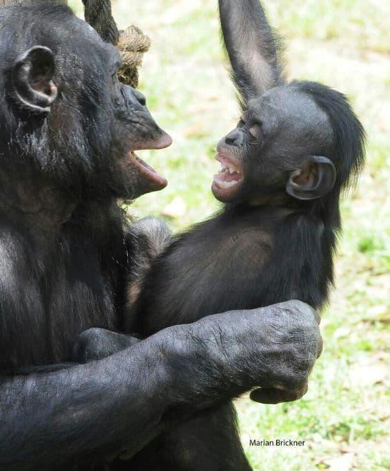 Bonobo zen and the art of masturbation maintenance