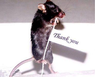 raton gracias
